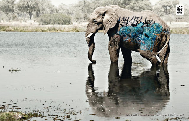 wwf-awareness-elephant
