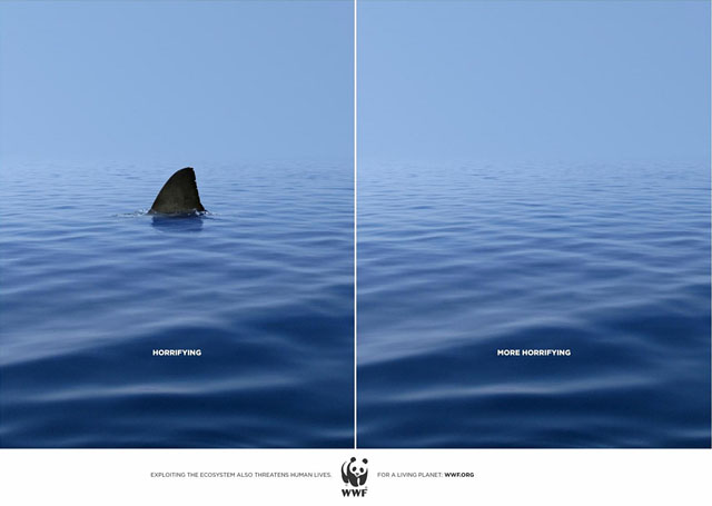 wwf-duo-shark