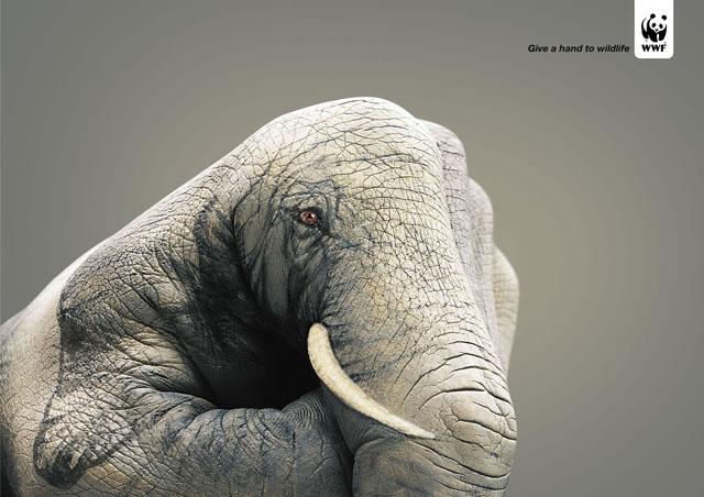 wwf-hands-elephant