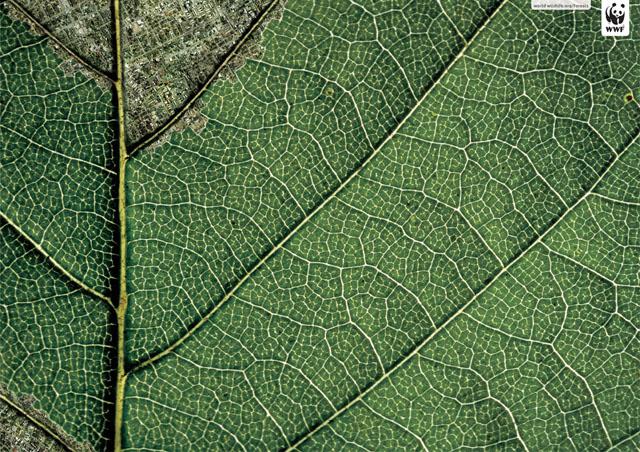 wwf-leaf-daintree